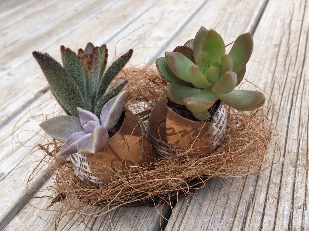 卵の殻と植物のコラボが可愛すぎる♡インテリアにしちゃお♪