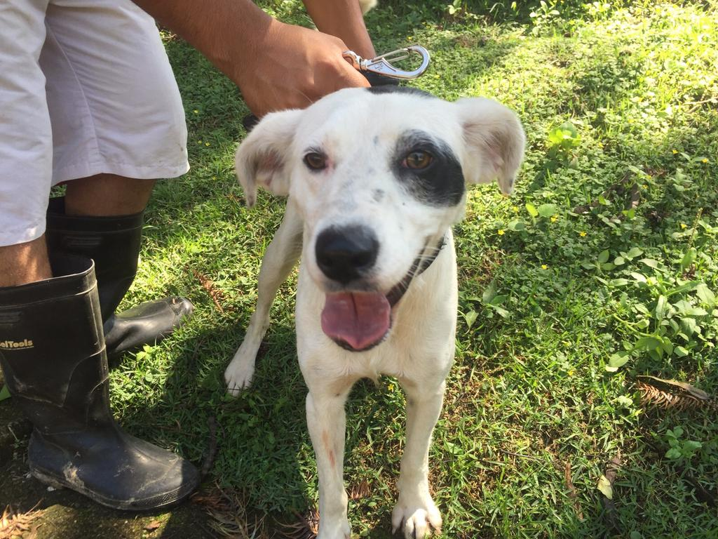 @AdoteUmGatinho Filhotona, menos de um ano, super fofa e boazinha, se dá bem com outros cachorros. https://t.co/FXlHNU3Zsi