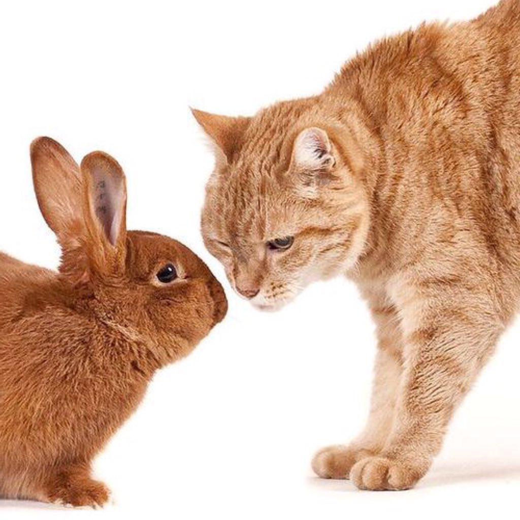 Картинки этого года кота и кролика такой особенности
