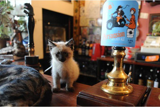 Are you a cat lover? Check out this pub in Bristol, it\'s full of cats!