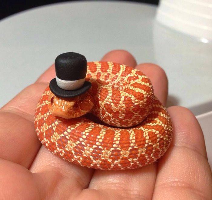 ヘビ嫌いの人でもこれなら好きになれる、帽子をかぶった可愛い!ヘビたち