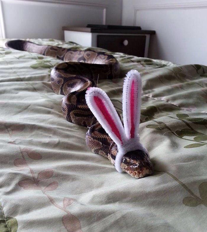 ヘビ嫌いの人でもこれなら好きになれる、帽子をかぶった可愛いwwwヘビたち