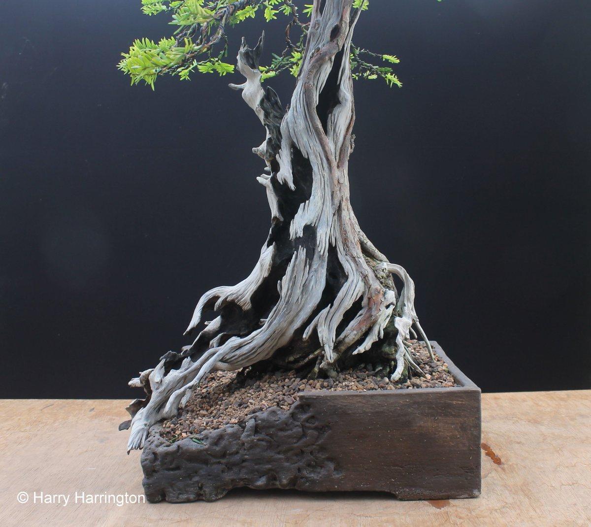 Bonsai Carving T Wiring Yew
