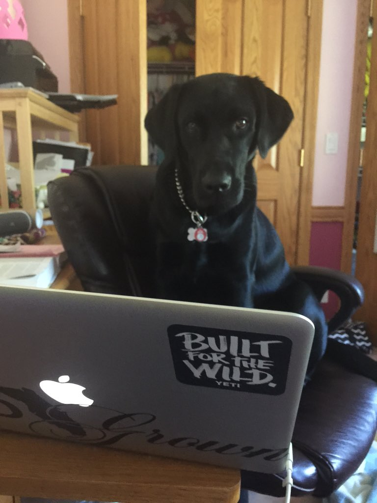 "Animal And Dog Porn carolyn mcclary on twitter: ""caught layla watching dog porn"