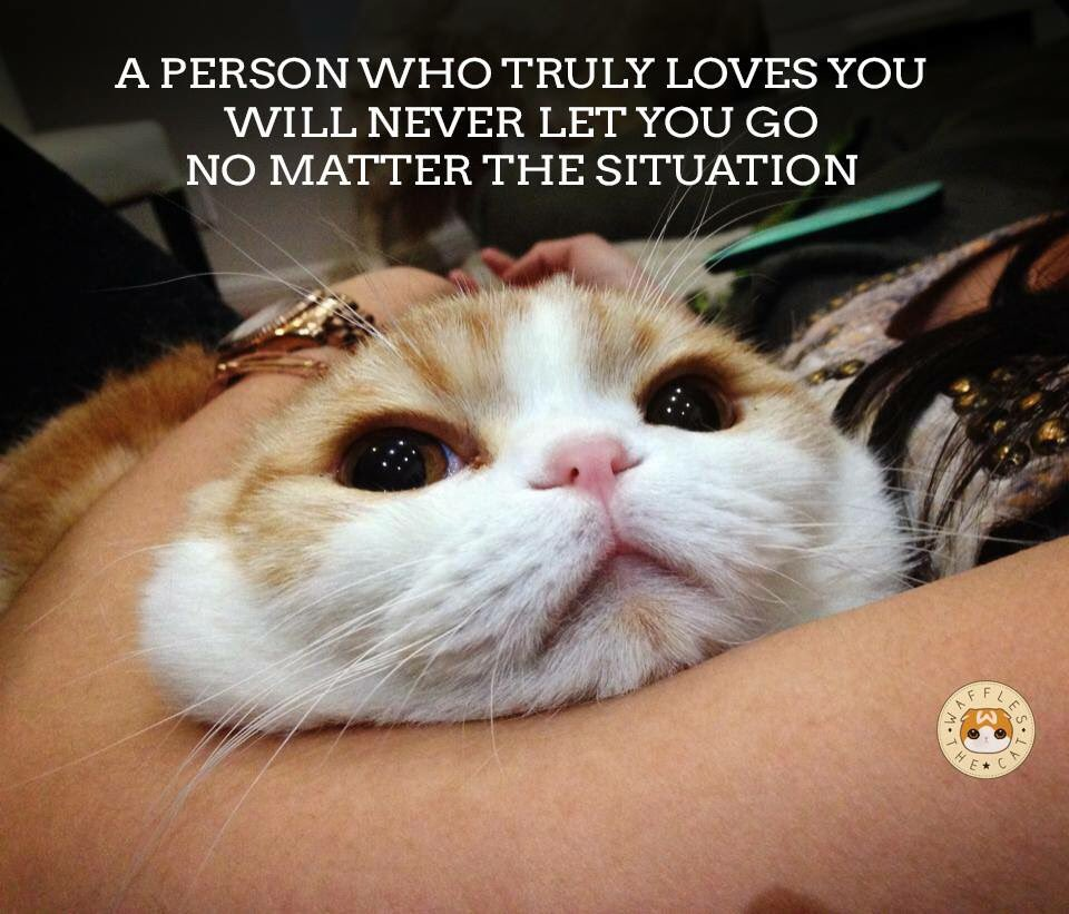"""Waffles the Cat on Twitter """"When you give a pill to a cat love quotes"""