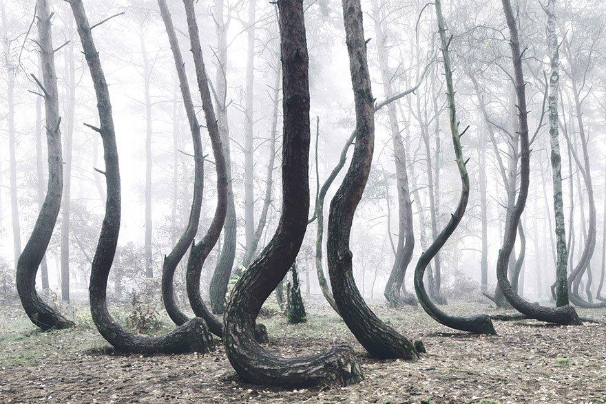 グリム童話に出てきそうな不思議な森が実在した!