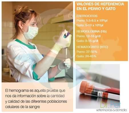 interpretacion de hemograma completo ppt