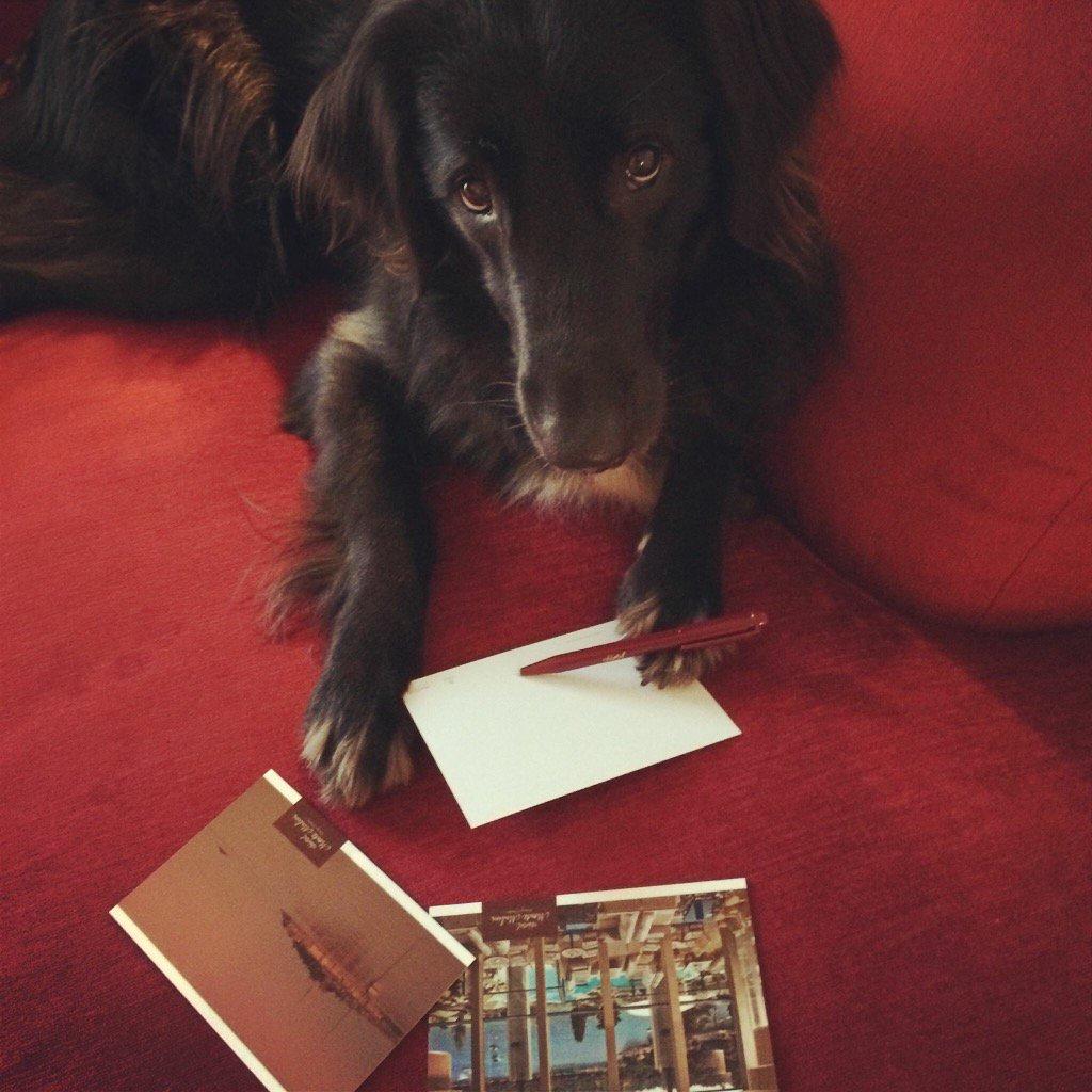RT https://t.co/2TpxKS3fxo I'm writing U postcard. U helped me #GainMoreFollowers. https://t.co/hzpxEkbK6I #Twitter #SMM @BamBamHappyDog