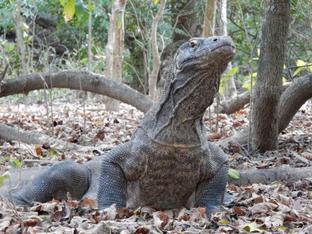 Parco nazionale di Komodo, il doodle di Google