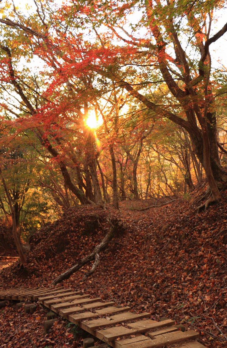 夕日に照らされ、小金色に染まる風景 https://t.co/ZgRWpcadbb