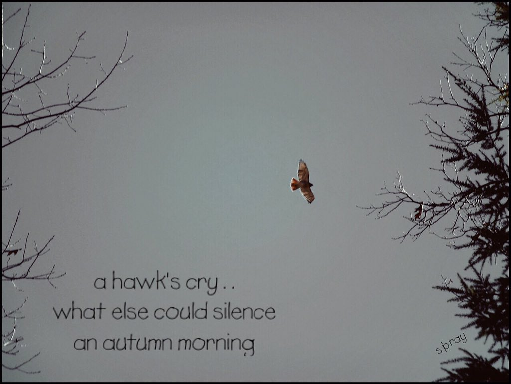 a hawk's cry . .  what else could silence an autumn morning  #haiku #nahaiwrimo https://t.co/qHx70QprAR