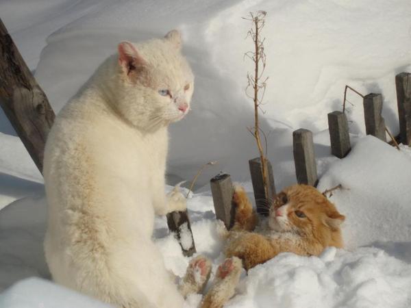 Картинки, прикольные картинки с надписями снег