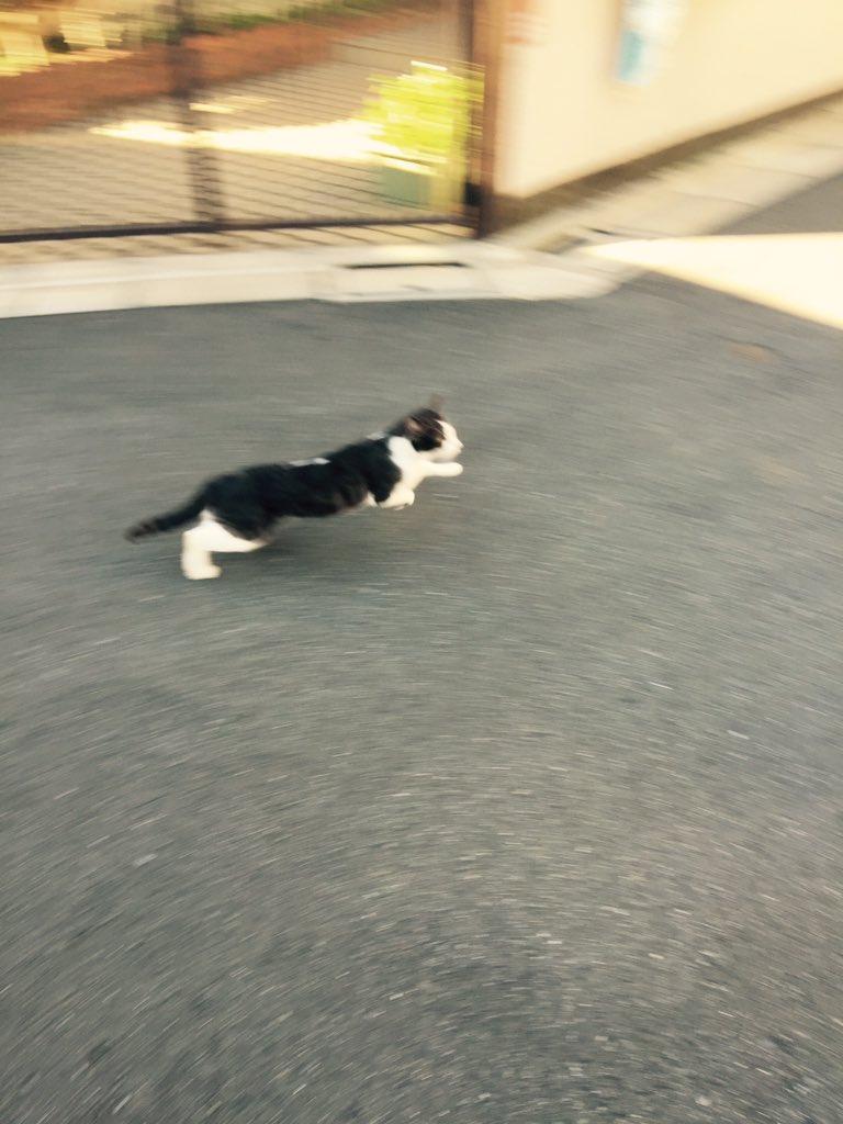 猫が日向ぼっこしてたから写真撮ろうとしたらビクッてして逃げてった…ぼっこ中に邪魔してごめんね…