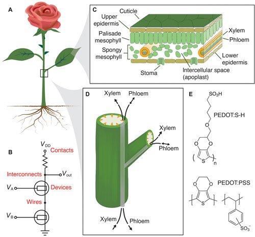 Researchers create electronic plants https://t.co/FoEmJ3UMKi  #nanotechnology https://t.co/GfSVbRAFkS