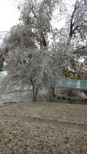 @kfor Frozen flag and falling trees in Enid Oklahoma https://t.co/zyzoTlMcG9