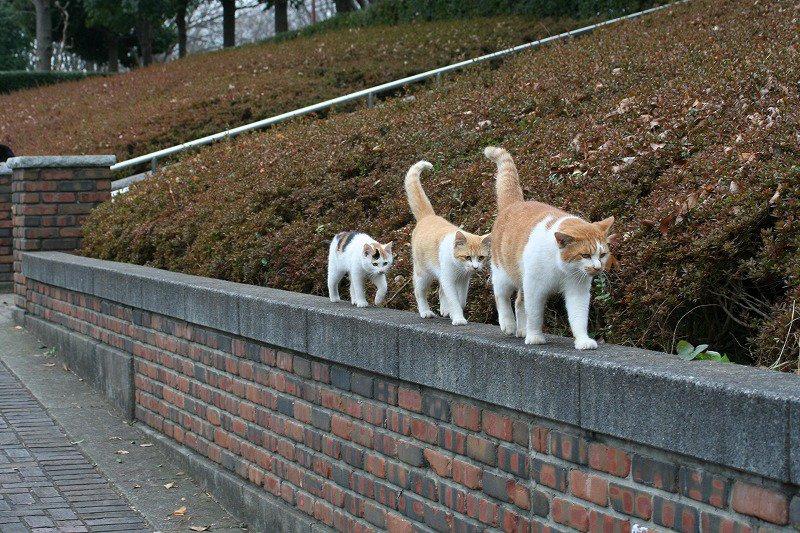 基本の塀歩きを教える先生と生徒。 pic.twitter.com/Ws7yVF9l9I