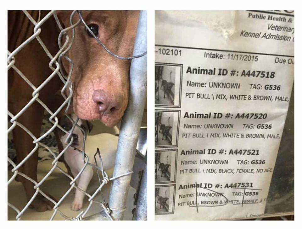 @BeepBeepKittey Harris county #TX URGENT please share,pls pledge,sweet #pit mix & 2 puppies! https://t.co/yMV2bE1NXR https://t.co/EMvouMgFCO