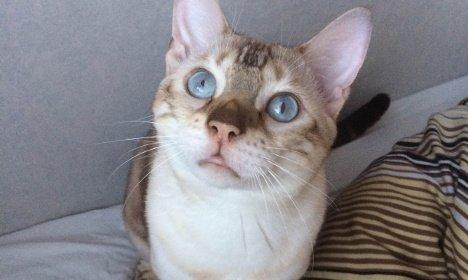 Спасший жительницу Швеции кот признан героем года