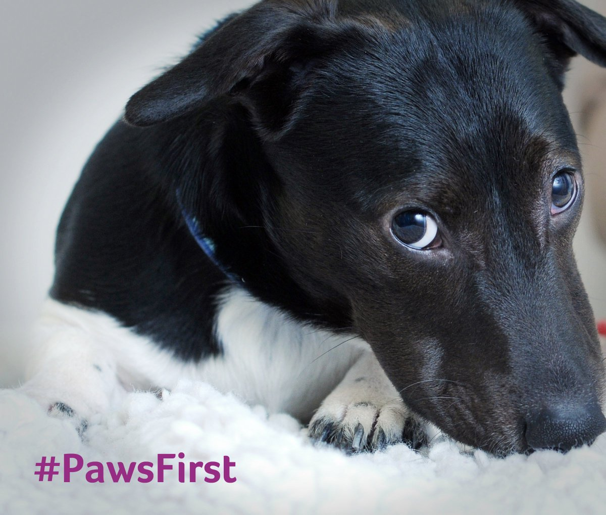 Pets shouldn't be bought on a whim. Support #PawsFirst to stop millions of pets suffering: https://t.co/TTAaLMv7Np https://t.co/I8zX2HAH4v