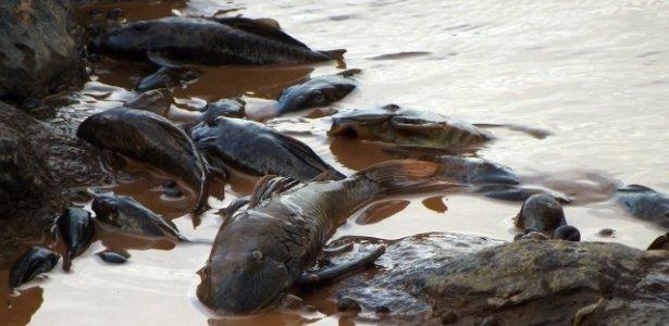 'A lama pode ter causado a extinção de animais e plantas que só existiam ali' https://t.co/ta1vnYWyvR #MeioAmbiente