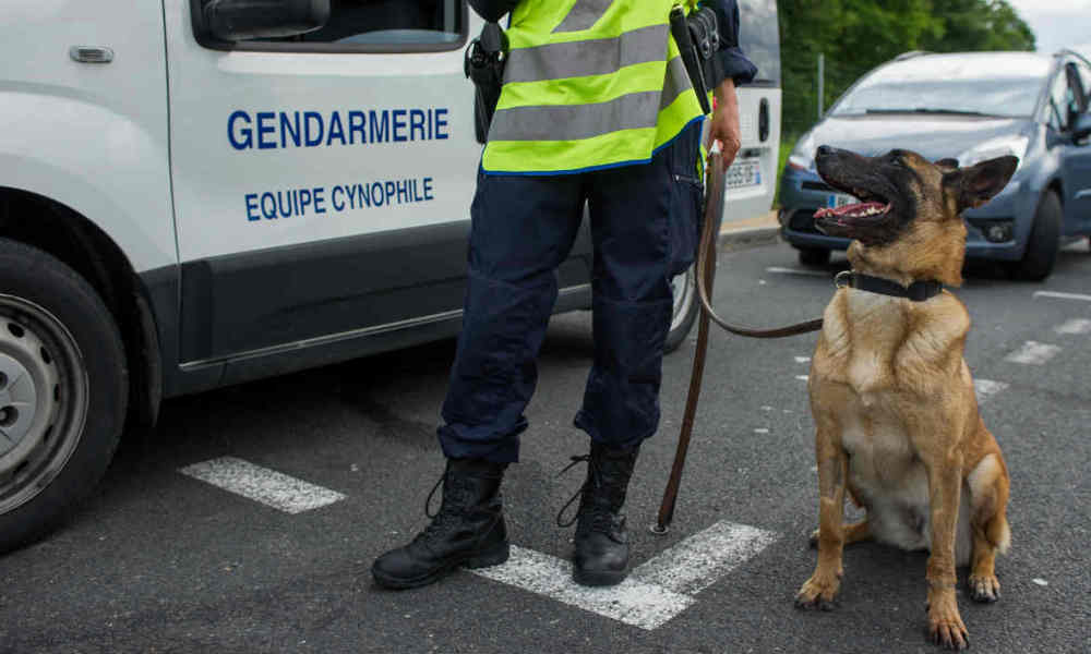 RIP Diesel, police dog killed in #SaintDenis operation against ISIS terrorists. https://t.co/VJr8m9T5yA