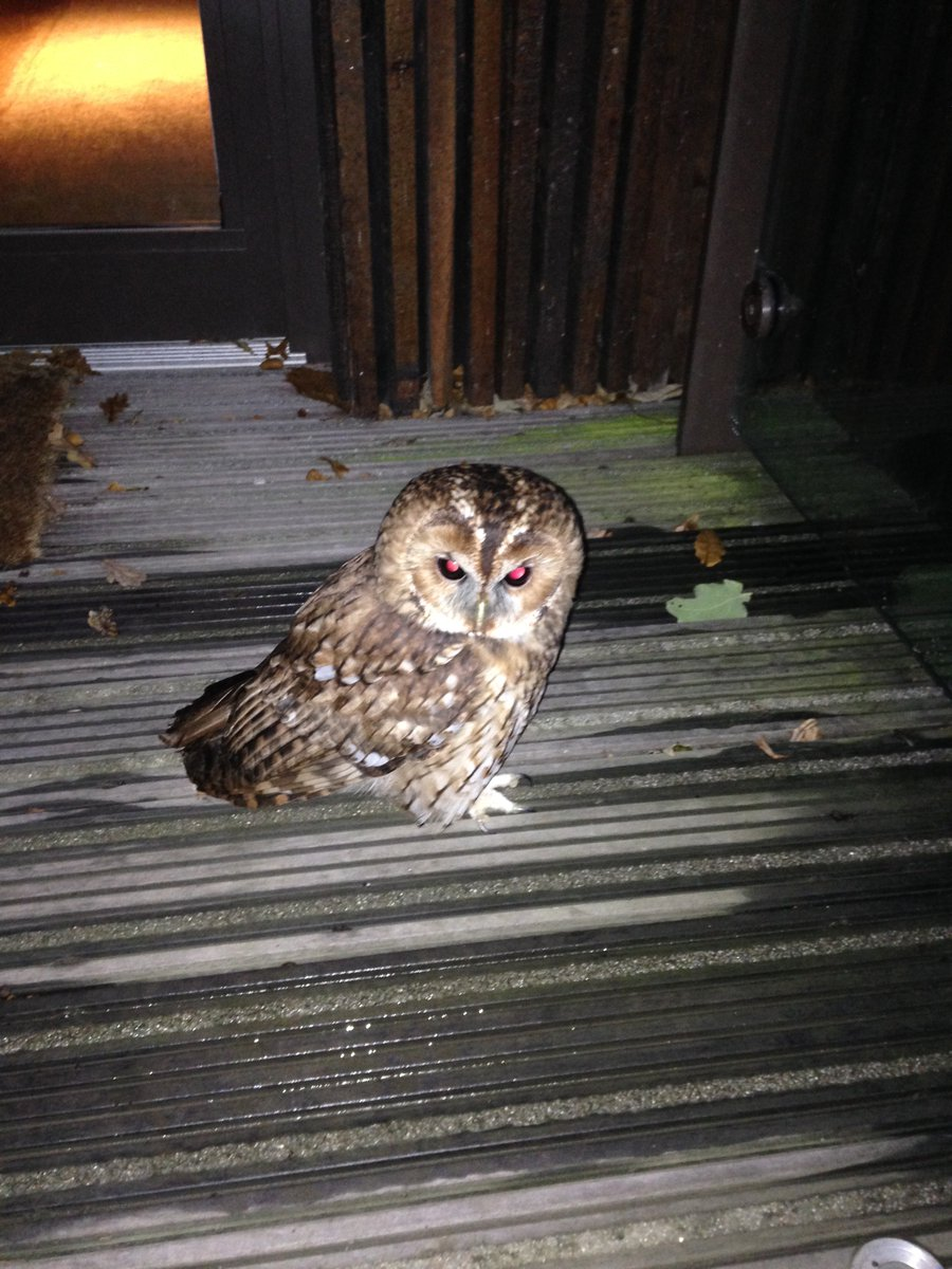 Look what we've spotted, a little owl on one of the Treehouse walkways... @CGTreeHouses @DarrenVenables #nature https://t.co/AqAWSCFXQa