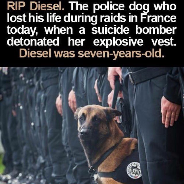 RIP Diesel !!!! Not just humans who are loosing there lives to these scum!!!!! #ParisAttacks #ParisRaid https://t.co/KOzgYKuXHX