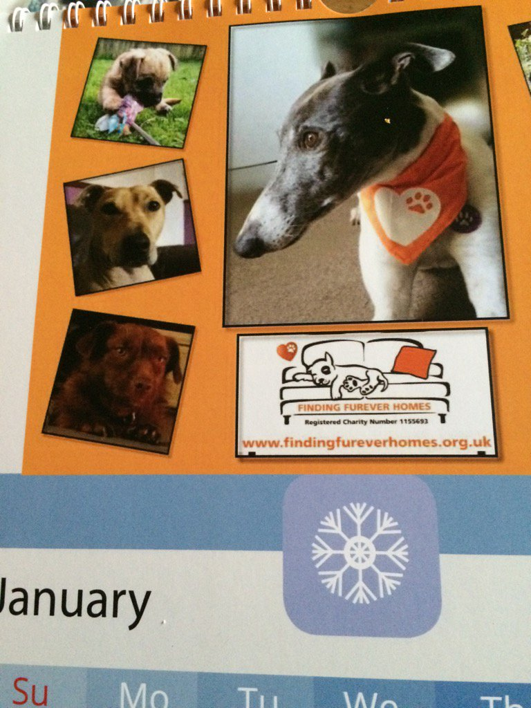 Yay my calendar has arrived @NWDogRescue