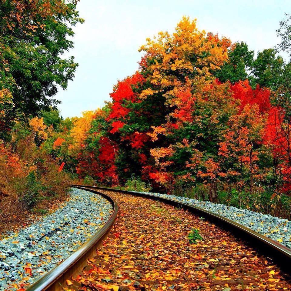 automne CUHYcXkWUAALeho