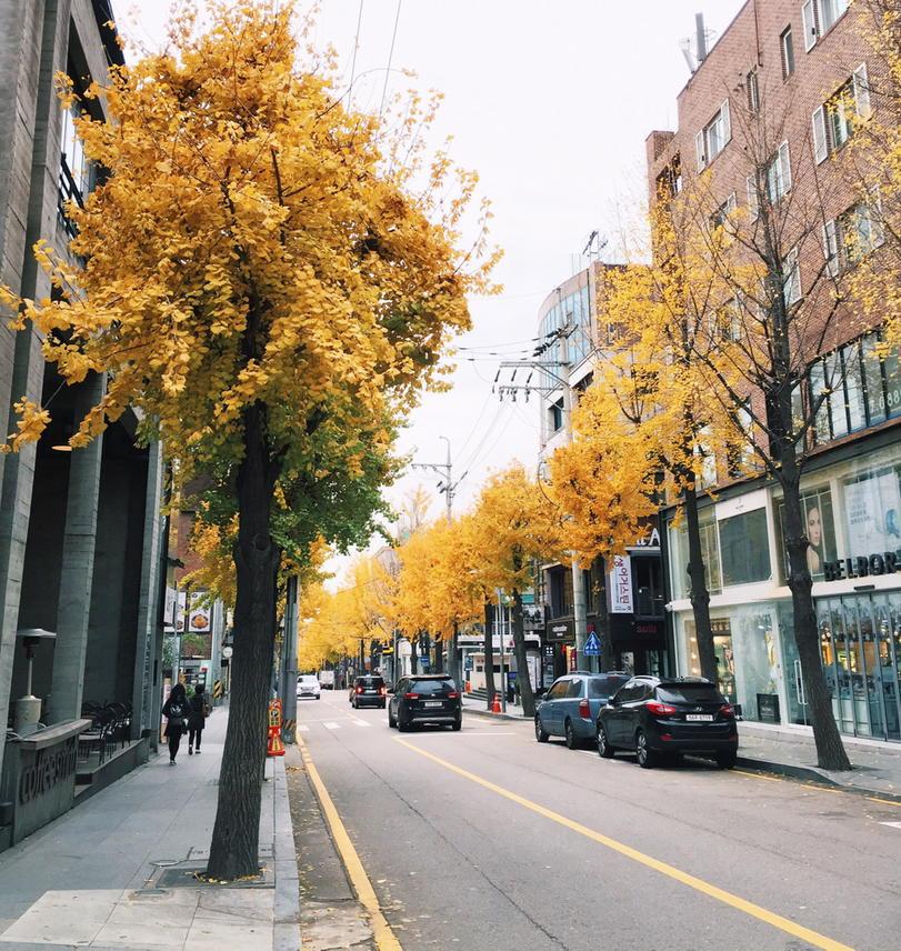 Image result for garosugil autumn