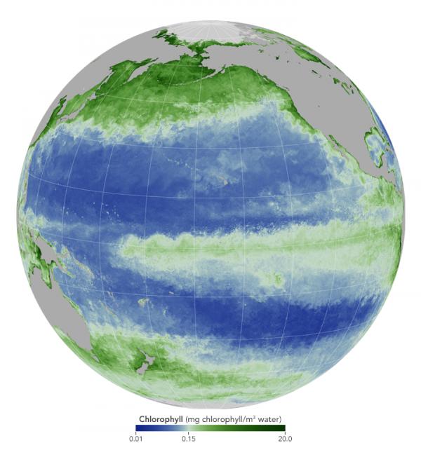 El Niño already disrupting ocean food web | Earth | EarthSky: https://t.co/o6eTAS79fQ https://t.co/AsORJNLTfF
