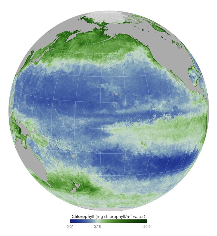 El Niño already disrupting ocean food web | Earth | EarthSky: https://t.co/o6eTAS79fQ https://t.co/sLOK8mVgyb