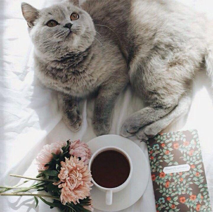 Утренний кот с кофе картинки
