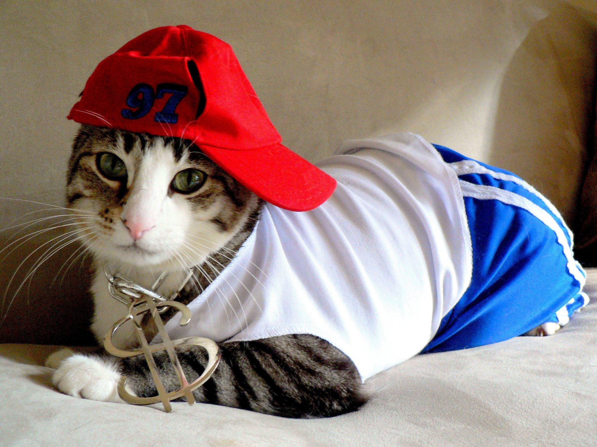 Картинка полицейского, прикольные картинки кошка в одежде