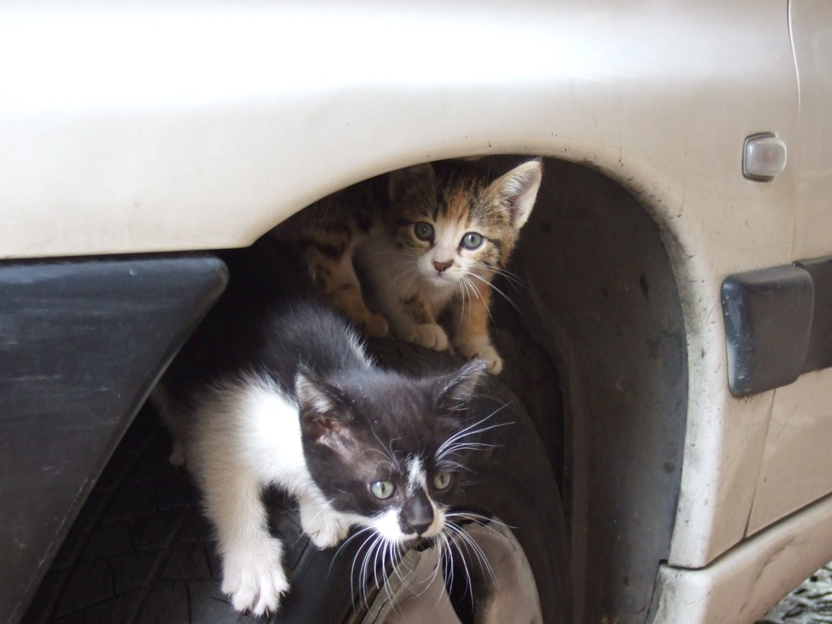 危なすぎ!こんな場所にもネコが潜っています!