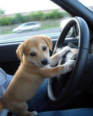 Lucky puppy flirt