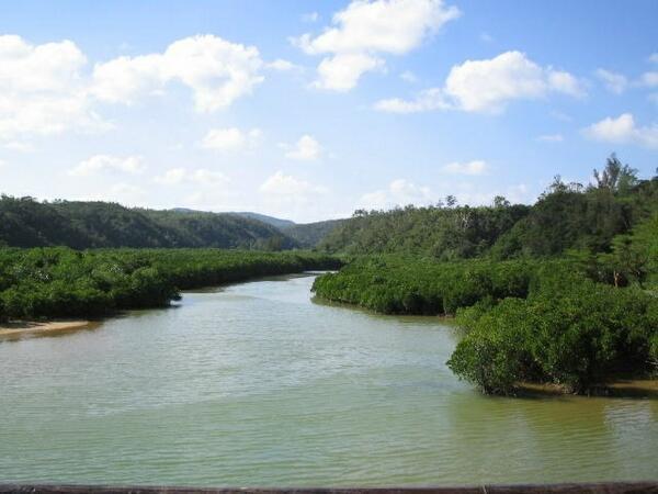 ☆慶佐次湾のヒルギ林。ヒルギとは、マングローブのこと。マングローブの生い茂る中を散策(*^^*)   #沖縄 #沖縄行きたい #沖縄好きと繋がりたい