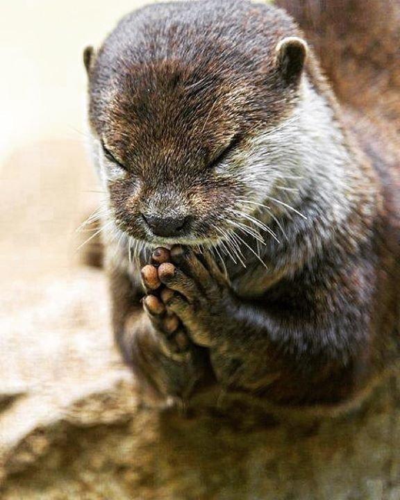 緊迫化する世界情勢にカワウソまでも祈りをささげる!