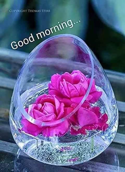 Good Morning Red Rose Gifs Tenor