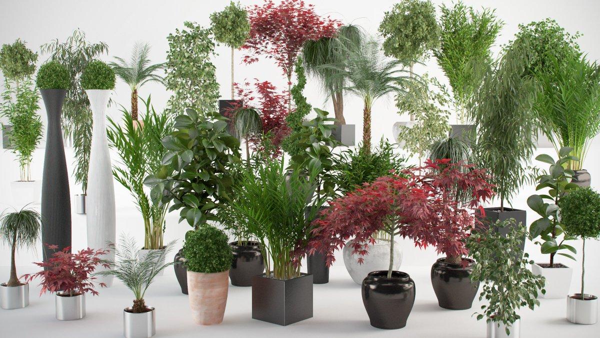 коллекция также благоприятные растения для дома фото с названиями что