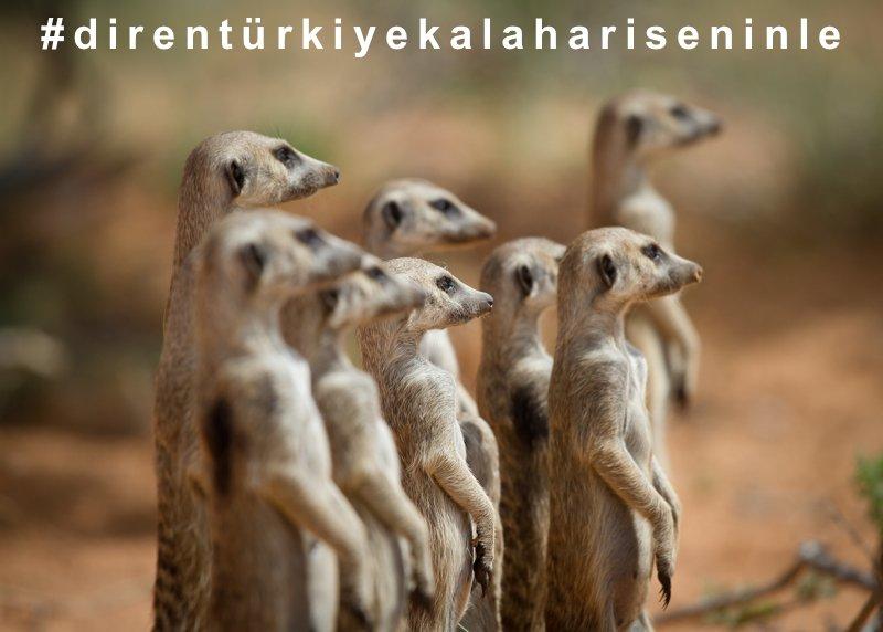 Thumbnail for Hayvan Davranışları @selinj