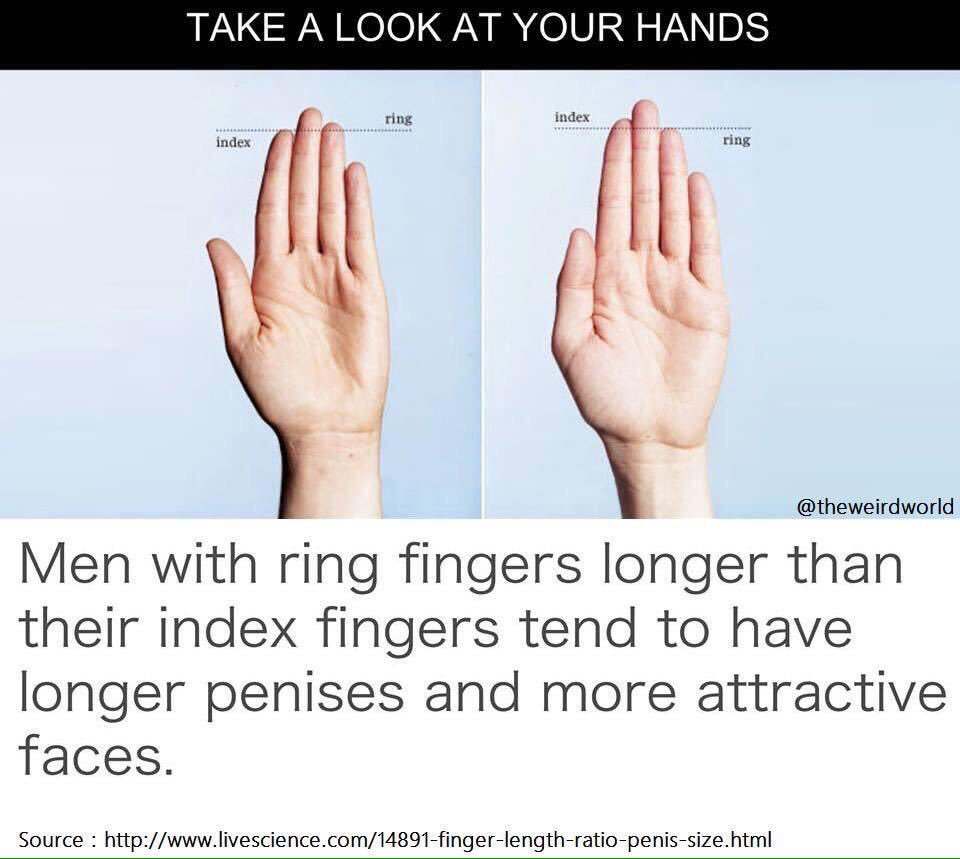 Penis hand length