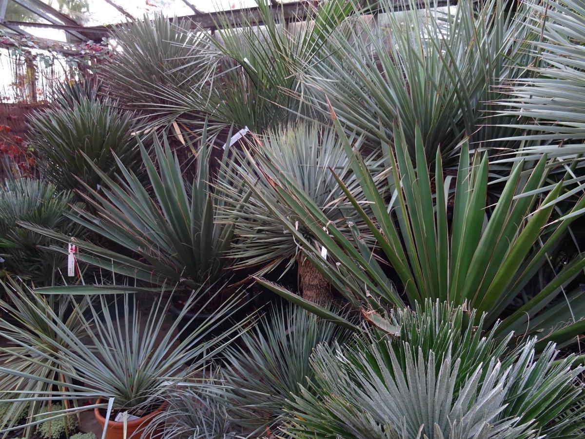 Urban Jungle On Twitter Bad Feng Shui Spiky Plants Near The