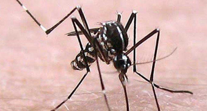 Febbre del Nilo Occidentale 2015: in Italia il più alto numero di contagi