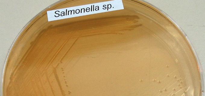 In Italia ed in Europa, la salmonella rappresenta il più alto rischio