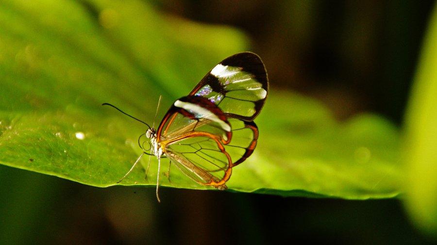 Фото cristal swift
