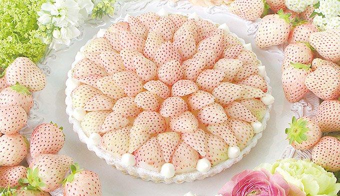 キル フェ ボンから「白イチゴ」をふんだんに使った贅沢な新作タルト - 銀座&大阪店で先行販売