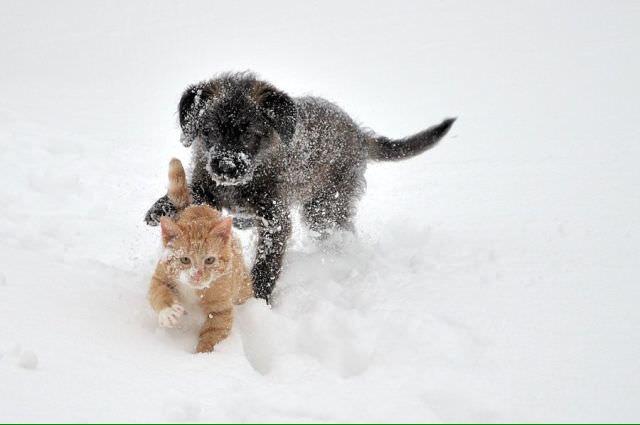 l 'hiver est là ! CUorBawWcAklSY_