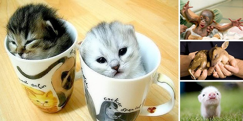 Which Is The Cutest Baby Animal? Here's 30 Adorable Examples! https://t.co/9kw7rHRZfG https://t.co/PK3yTYCpOO