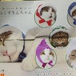 【ねこんずきん】を着れば、自慢の愛猫もワンランク上の可愛さに変身するよ‼️